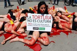 Animal rights activists pretending to be bulls stuck through with banderillas lie on the ground covered with mock blood during a protest against bullfighting in Barcelona.